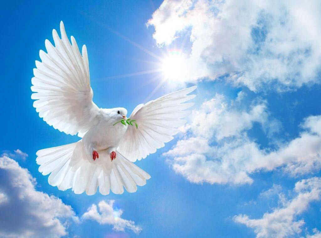 Поздравления с днем рождения мирного неба над головой